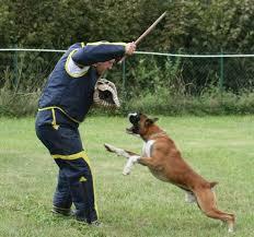 boxer addestramento