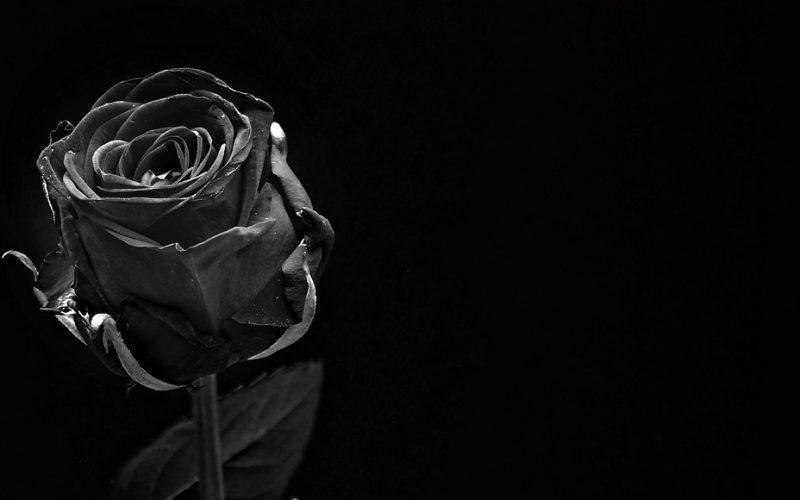 rose-1460773_960_720